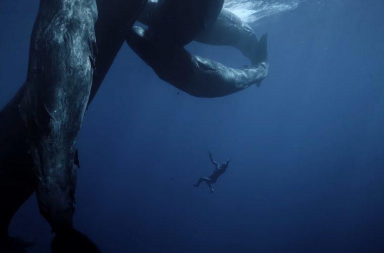 Mergulhador Guillaume Nery nada ao lado de baleias cachalote