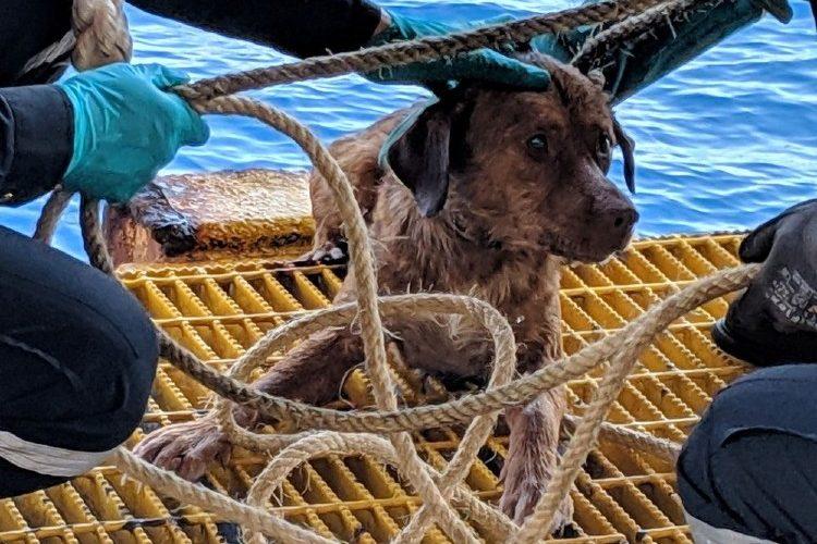Cão resgatado em alto mar na Tailândia