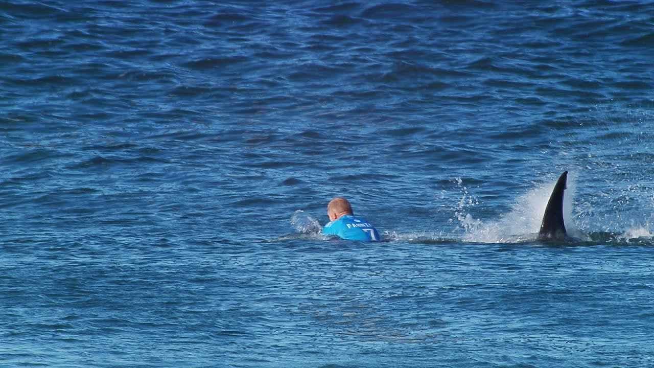 mick fanning tubarão