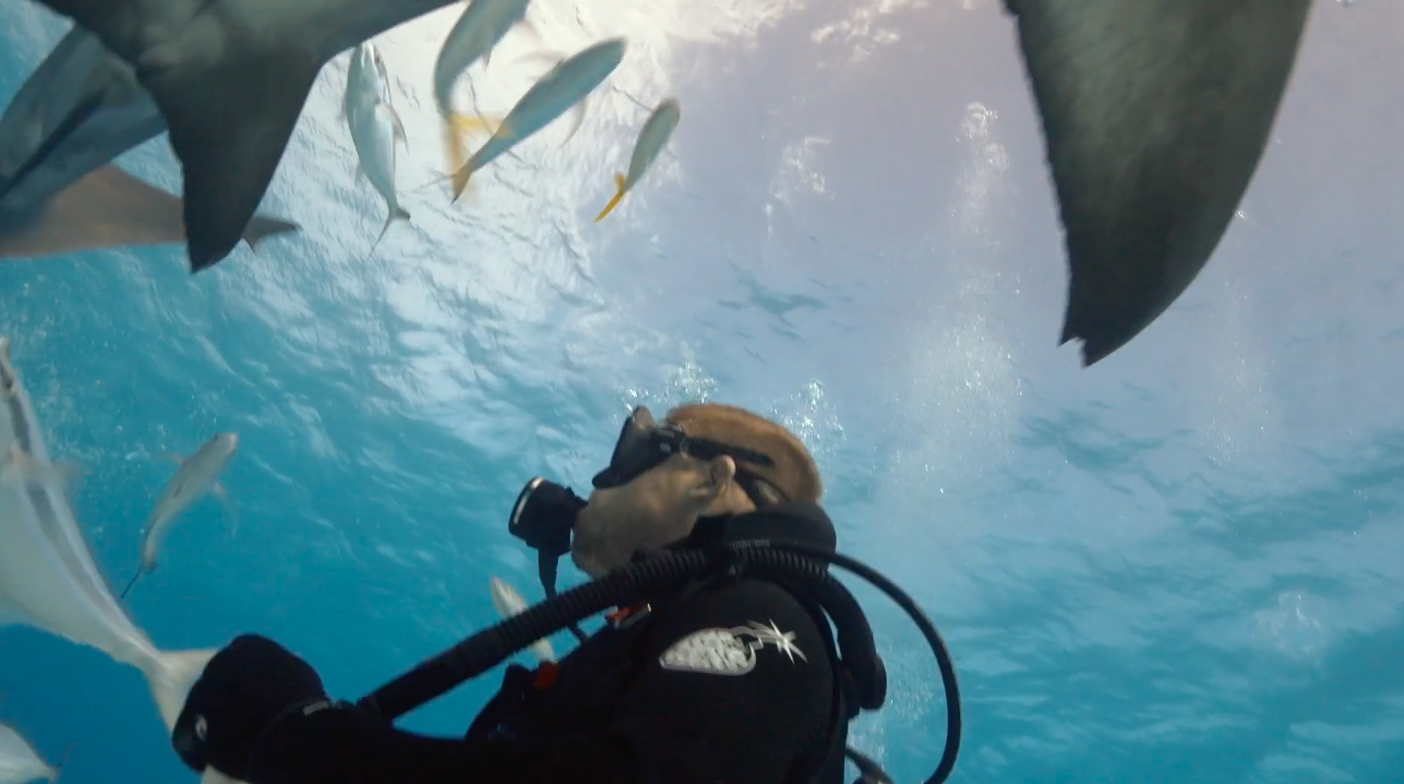 Mick Fanning nada com tubarões