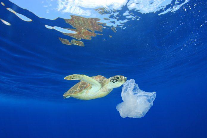 Cientistas alertam sobre plásticos expostos ao sol no oceano, que liberam substâncias químicas. Efeito dessas ainda é desconhecidoPoluição plástica nos oceanos