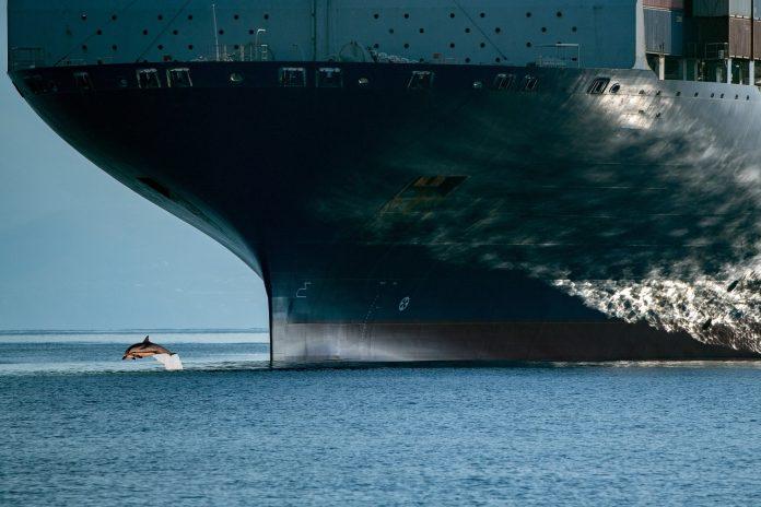 Poluição sonora é mais uma ameaça à vida nos oceanos