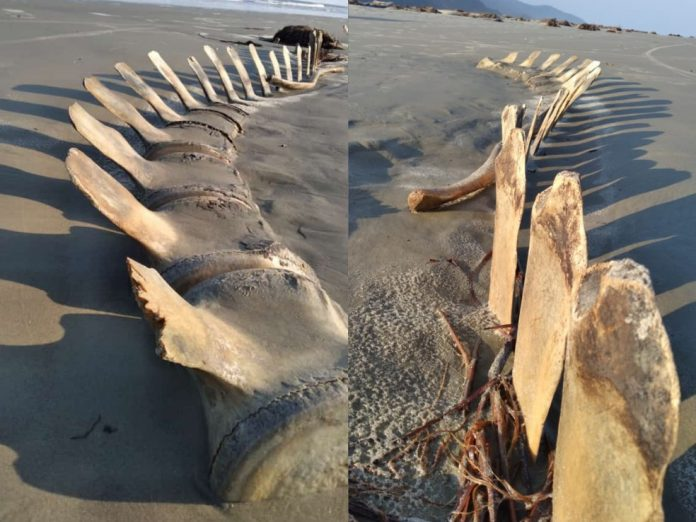 Esqueleto gigante desaparede misteriosamente. Foto: Arquivo pessoal/Marcelo Rodrigues