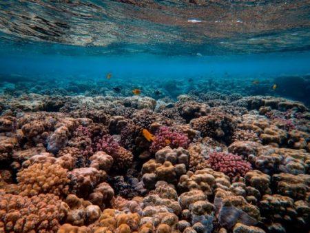 Feridas com corais: o que fazer?