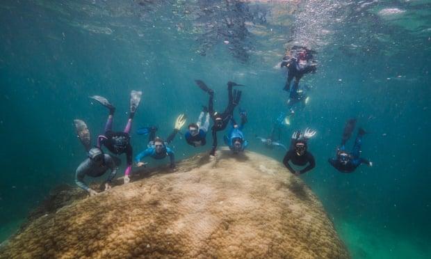 Coral gigante de 400 anos é descoberto na Grande Barreira